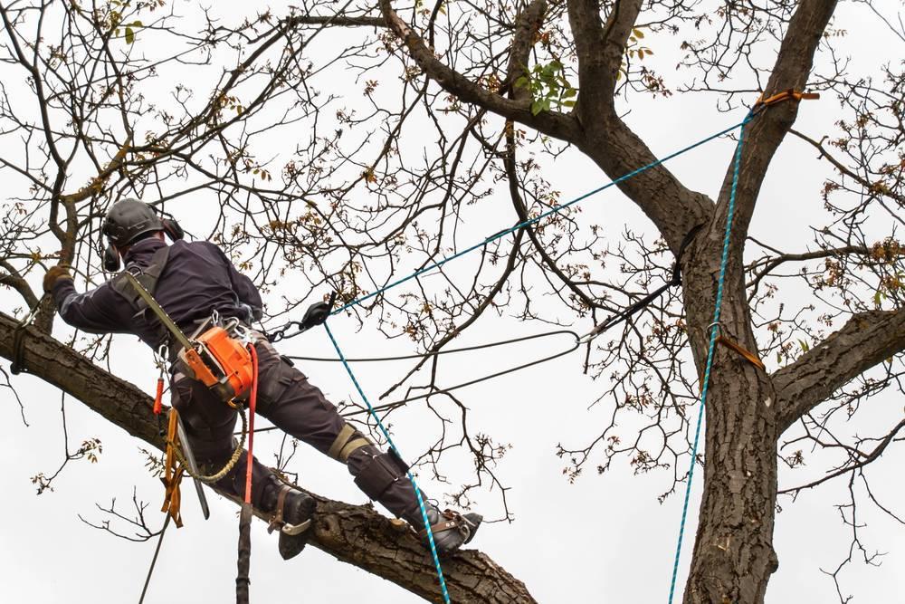 Los trabajos en altura cobran un papel importante en el cuidado del medio ambiente
